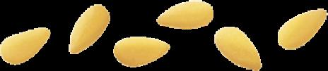 MIDOLLINE BARILLA N.24 24x0,50